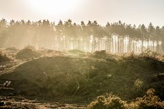 Vernietigde het bos sparen de bossen stock afbeelding