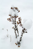 Vernietigde installatie in de sneeuw Stock Foto's