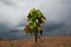 Vernietigde natuurlijke bos en onweerswolk stock foto