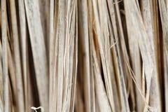 Vernietigde nipapalm Stock Afbeelding