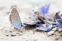 Vernietigde vlinderfamilie Stock Foto's
