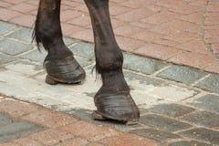 Vernietigde zwarte hoeven van een paard stock foto
