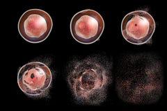 Vernietiging van een cel Conceptueel beeld stock illustratie