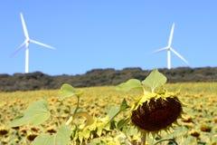 Vernieuwbare energieproductie, bio en wind, Spanje Stock Fotografie