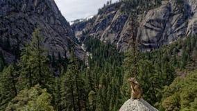 Vernon Falls, Yosemite Valley, California. View over Yosemite Valley from Vernon Falls in Yellowstone National Park, California Royalty Free Stock Image