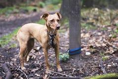 Veronachtzaamde hond Stock Foto's