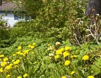 Veronachtzaamde tuin stock foto's