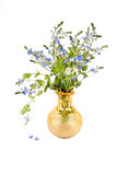 Veronica chamaedrys. Bouquet of Flowers Veronica Chamaedrys in a yellow vase isolated on white background Royalty Free Stock Photography