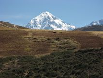 Veronica de bâti, les Andes, Pérou image stock