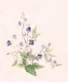 Veronica flowers watercolor painting. Stock Photos