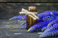 Veronica longifolia flower essential oil. Naturopathy. Herbal medicine stock photo