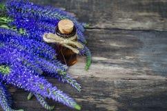 Veronica longifolia flower essential oil. Naturopathy. Herbal medicine royalty free stock photo