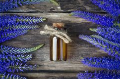 Veronica longifolia flower essential oil. Naturopathy. Herbal medicine royalty free stock photos