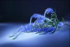 Veronica longifolia. Light brush Royalty Free Stock Photo