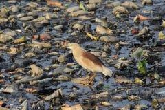 Verontreinigde vijver en een vogel stock foto