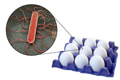 Verontreiniging van eieren met Listeria monocytogenes bacteriën, medisch concept voor transmissie van listeriosis stock afbeeldingen