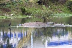 Verontreiniging van Pinheiros-rivier in Sao Paulo Royalty-vrije Stock Afbeeldingen