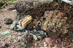 Verontreinigings rotsachtige kustlijn stock foto
