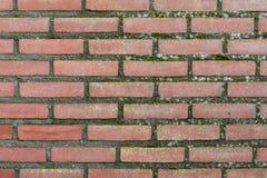 Verouderend bakstenen muur in mos wordt behandeld dat Stock Afbeelding