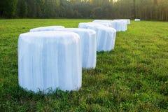 Verpackt in einem weißen Polymerfilm des Neigens und im losen Heugras für Fütterungsviehbestand im Winter stockfoto