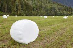 Verpacktes frisches Gras in der Landschaft Norwegische Landschaft agri Stockfotografie
