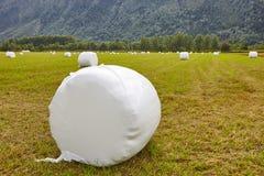 Verpacktes frisches Gras in der Landschaft Norwegische Landschaft agri Lizenzfreies Stockbild