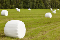 Verpacktes frisches Gras in der Landschaft Norwegische Landschaft agri Stockbilder