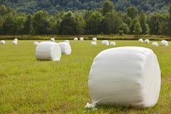 Verpacktes frisches Gras in der Landschaft Norwegische Landschaft agri Lizenzfreies Stockfoto