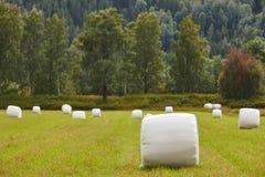 Verpacktes frisches Gras in der Landschaft Norwegische Landschaft agri Stockbild