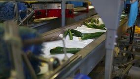 Verpakkende machine voor komkommer bij fabriek stock videobeelden