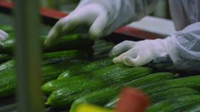 Verpakkende machine voor komkommer bij fabriek stock footage