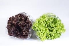 Verpakte hydroponic rood en groene sla Royalty-vrije Stock Foto's