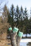 Verpflanzung des Obstbaumes Stockbilder