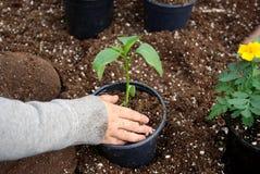 Verpflanzungsanlagen lizenzfreie stockbilder