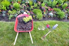 Verpflanzungscelosiaanlagen in einen Blumengarten Lizenzfreies Stockfoto