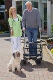 Verpleegster Helping Man met Walker Take Dog voor Gang stock afbeeldingen
