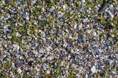 Verpletterde overzeese shells achtergrond Royalty-vrije Stock Foto's