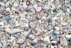 Verpletterde Shells Stock Foto