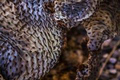 Verrückte Beschaffenheit eines Kaktus lizenzfreie stockfotos