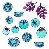 Verrückte blaue Türkis-Tomaten mit rosa Blättern Räuberische Gemüse-Reihe Realistische Hand gezeichnete Illustration Savoyar Stockbild
