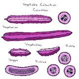 Verrückte rosa Gurke Räuberische Gemüse-Reihe Realistische Hand gezeichnete Illustration Savoyar-Gekritzel-Art Stockfoto