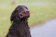 Verrückter Hund Stockbilder