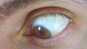 Verrückter und Furcht-Blick des menschlichen Auges Langsame Bewegung stock video
