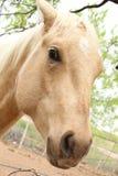 Verrücktes Pferd Stockfoto