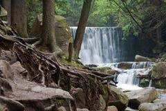 Verraco salvaje de la cascada Imagenes de archivo