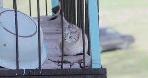 Verraste blik van de kat die in de kooi zit stock videobeelden