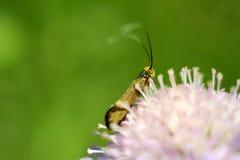 Verraste vlinder Stock Afbeeldingen