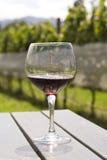 Verre à vin avec le vin rouge dans la vigne Photographie stock