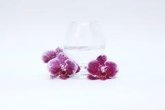Verre à vin et orchidée en verre Photo stock