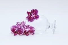 Verre à vin et orchidée en verre Photos libres de droits